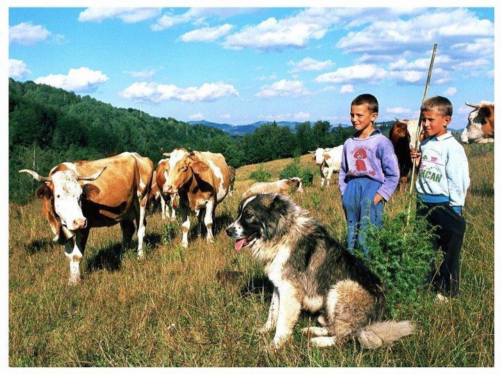 Deca i životinje - Page 18 PRIRODNE%20LEPOTE%20BO%C5%BDJEG%20SVETA%20I%20BO%C5%BDJIH%20NARODA%2015